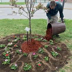 Bagged Mulch, Soils and Amendments