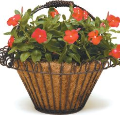 Planters and Hanging Baskets